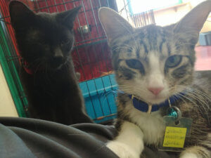 When the two of them came to me at the adoption center, it was a done deal